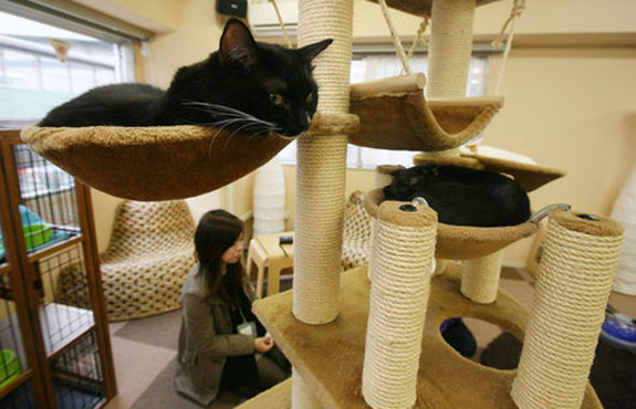 Calico Cat Cafe
